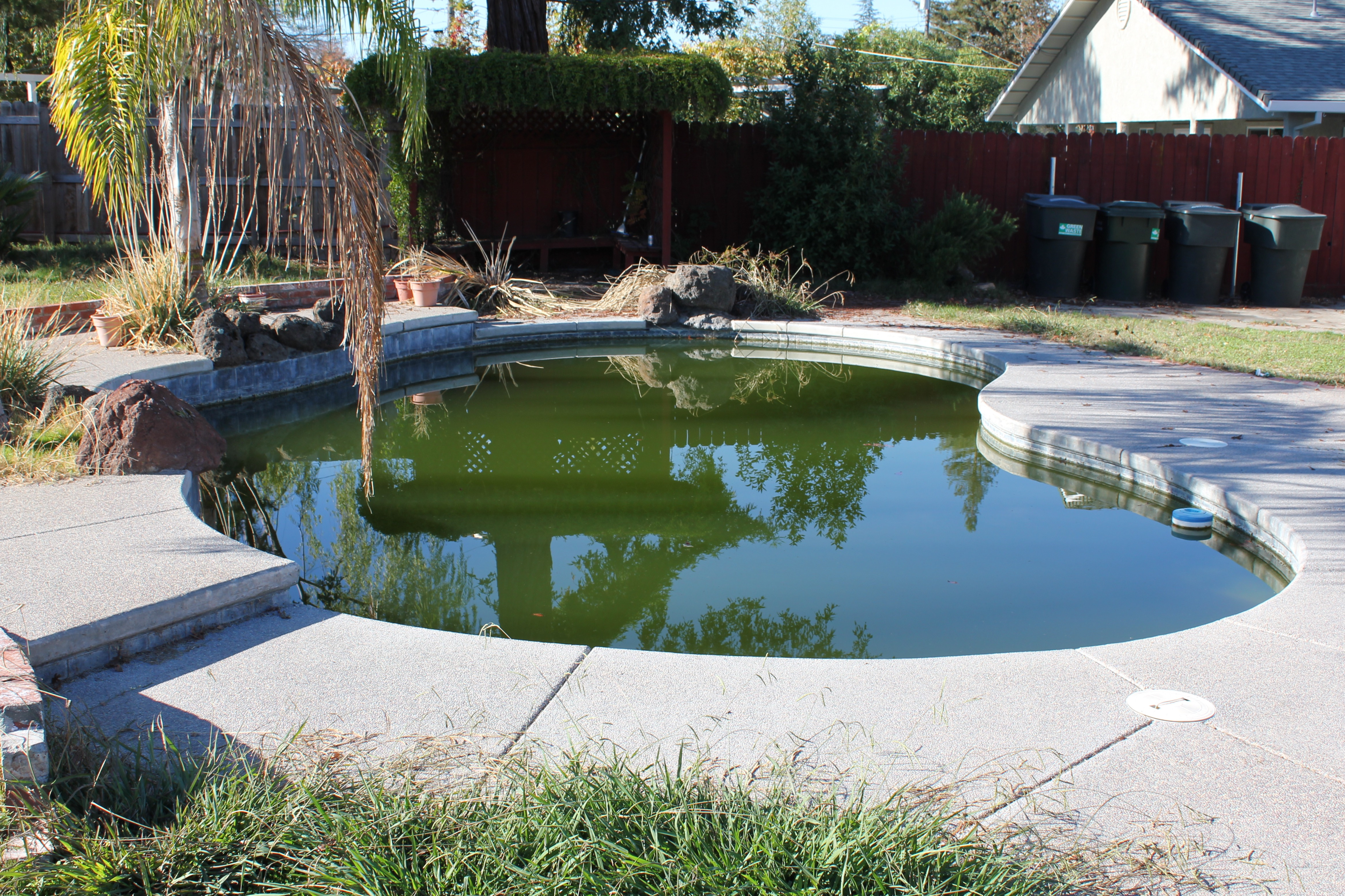 Algae Clean Up California Pool Care Pool Service