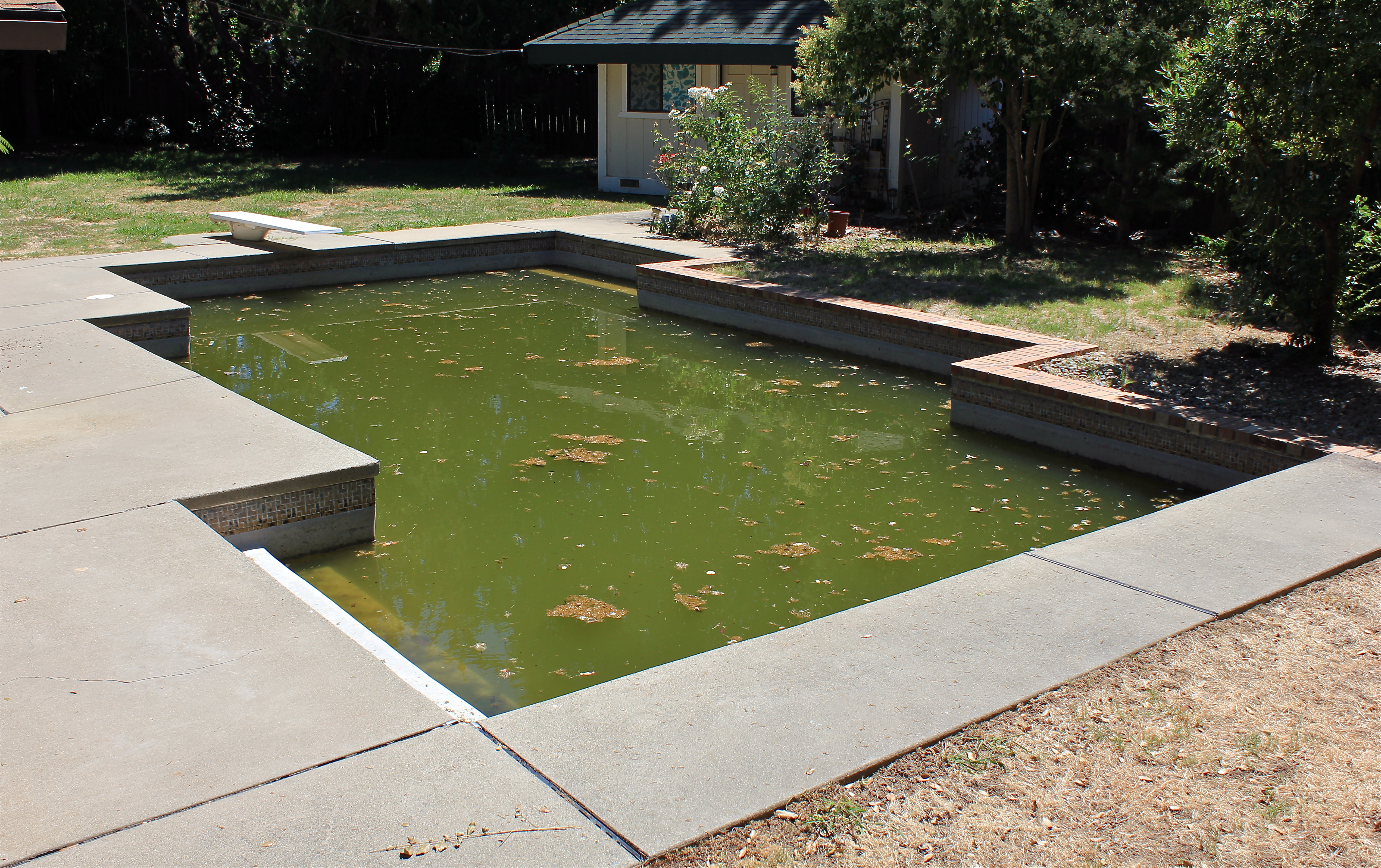 how to clean algae from pool